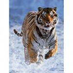 Пазл Тигр на снегу 500