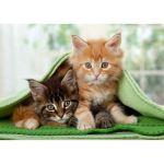 Пазлы Котята в одеяле 1500